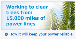 Working to clear trees from 15,000 miles of power lines. How it will keep your power reliable »