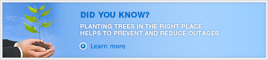 PLANTING TREES IN THE RIGHT PLACE HELPS TO PREVENT AND REDUCE OUTAGES. Learn more »